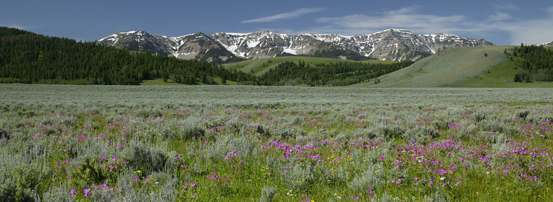 West Centennial Mountains and wildflowers along Red Rock Road in Montana.