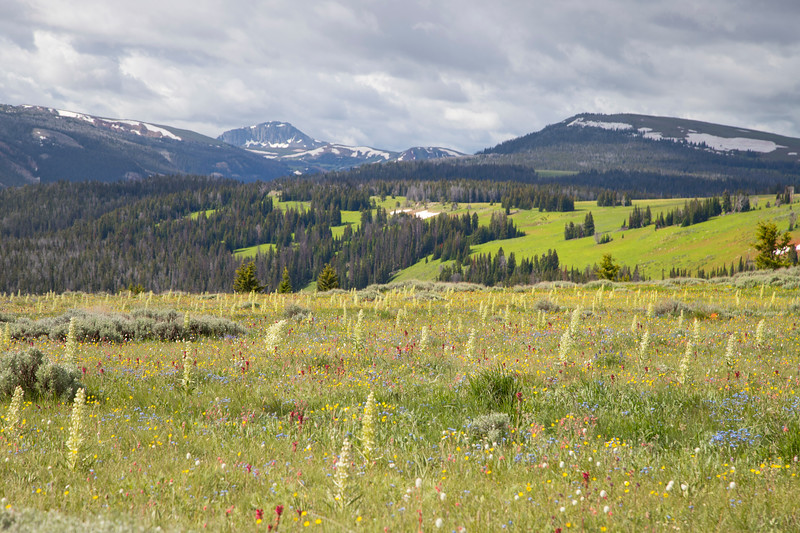 Monument Plants and Black Butte in Gravelly Range