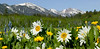 A profusion of wildflowers (White Mule Ears, Dandelions, Camas) after a very snowy (and late) winter at Sawtelle Meadow in Island Park, Idaho. East Centennial Mountains in the background. June 20, 2008.