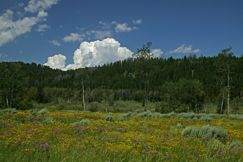 Wildflowers, forest and clouds along Red Rock road in Island Park, Idaho.