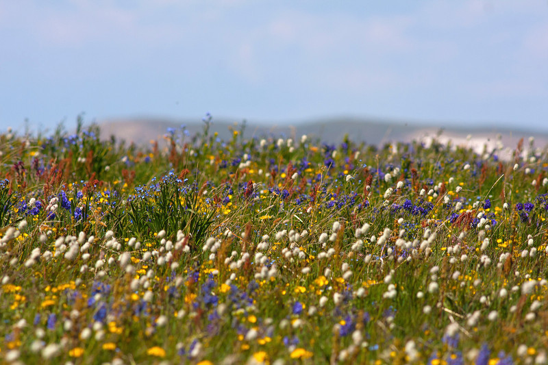 Profusion of wildflowers along Gravely Ridge Road in southern Montana. July 3rd, 2012.