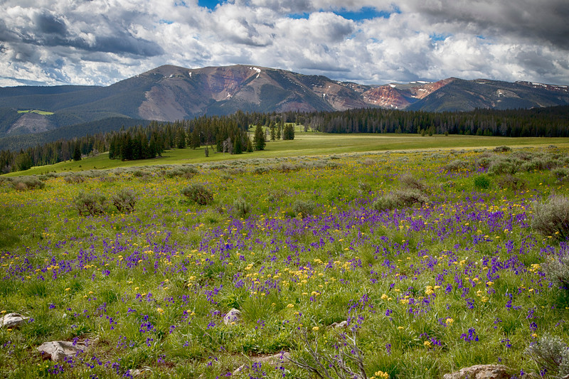 Wildflowers and Gravelly Range