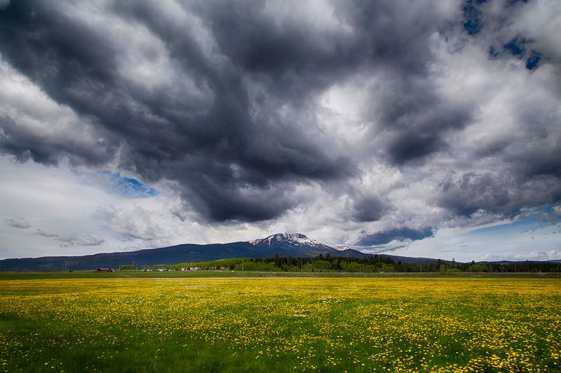 Flat Ranch and Sawtelle Peak wildflowers