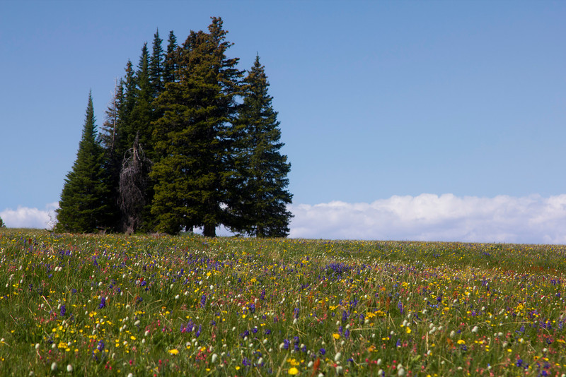 Mixed wildflowers along the Gravelly Range Road in Montana on July 3rd, 2012.