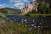 Harbell wild flowers along the beautiful Gallatin River in Montana. 2012