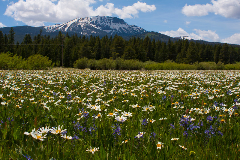Sawtelle Peak with Mule Ear's and Camas