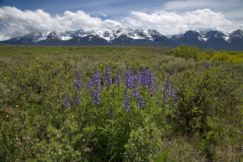 Lupine and Centennial Range
