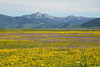 Targhee Peak and Wildflowers
