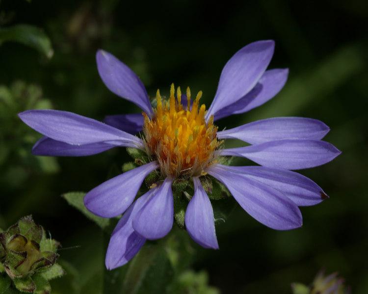Unknown wildflower Idaho (near Red Rock RV Park)