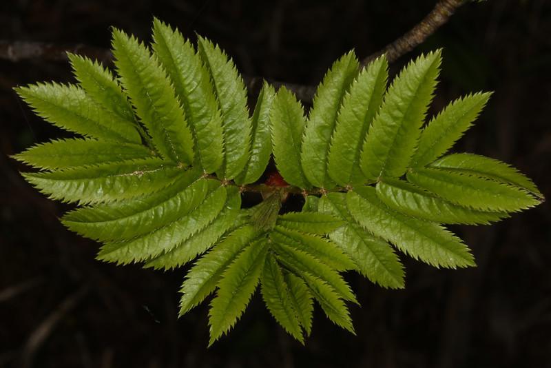 Leaves_130405