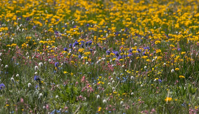 WildflowersGravely_149476