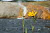 LittleSunflowerFireholeRiver_175601