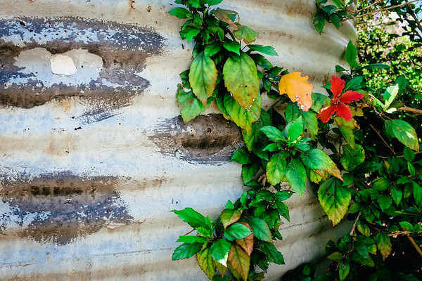 Water tank vine