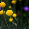 Flora Orbs