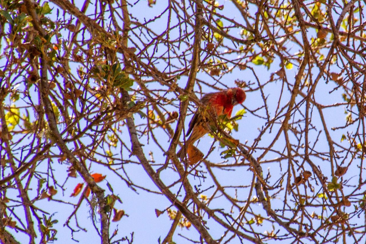 Filoli_Bird_Walk-19.jpg