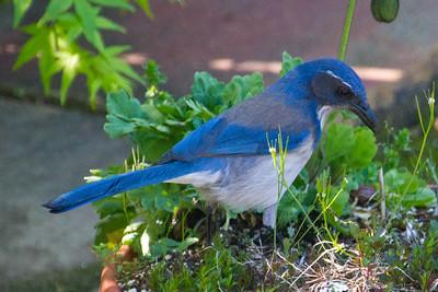 Backyard_Birds-48.jpg