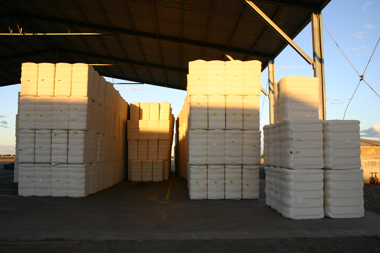 Cotton bales after ginning