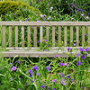 A bench at Deep Cut Park in Middletown, New Jersey seems only to be used by the wildflowers.