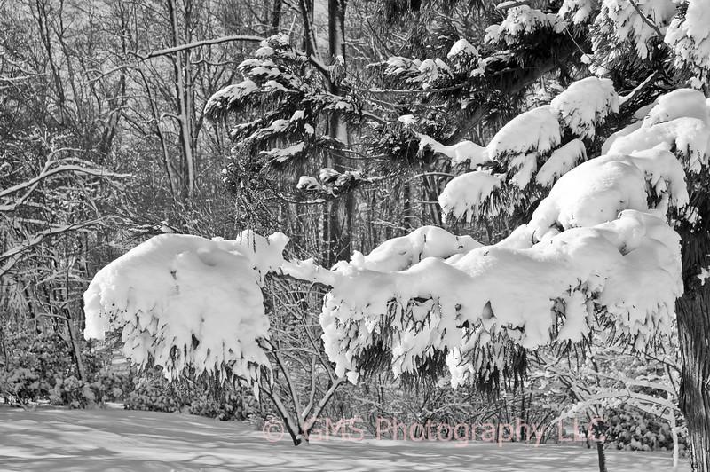 Heavy Snow At Holmdel Park