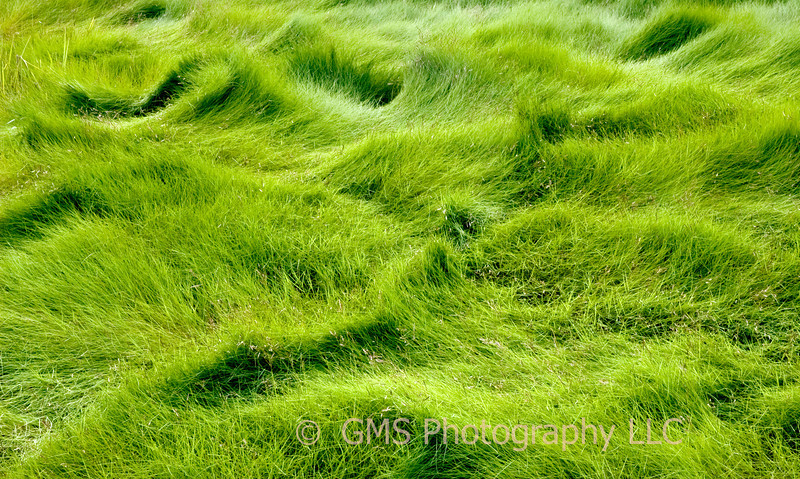 Waves of swamp grass formed by changing tides and wind at Cheesequake Park in Old Bridge, New Jersey, July 2007.  The park is environmentally unique because it contains both salt a fresh water marshes.