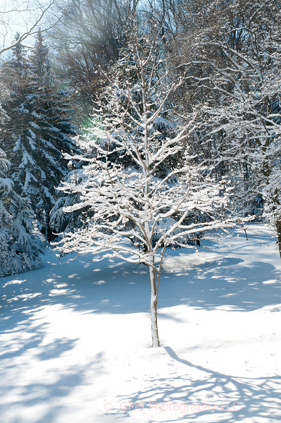Tree In Snow At Holmdel Park
