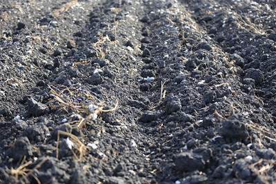 Soil ready for planting cotton