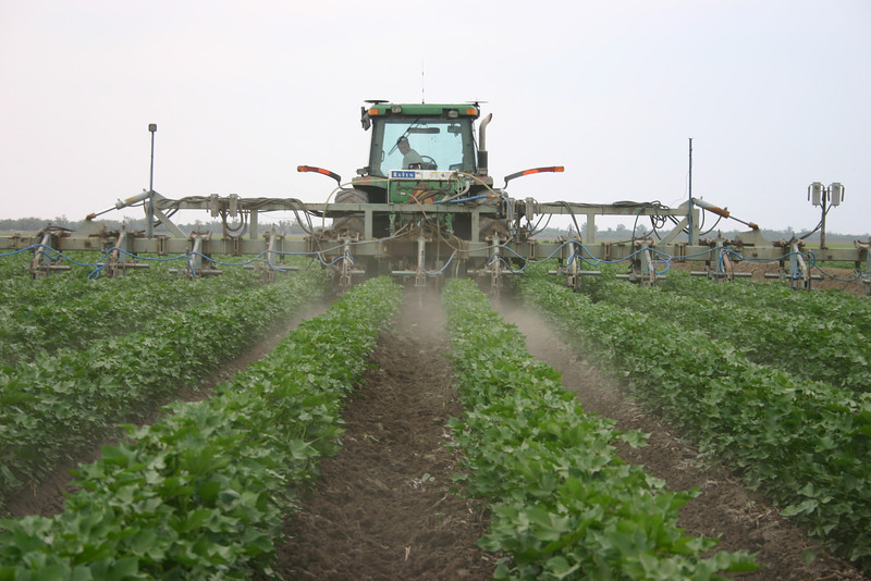 Cotton being cultivated down the rows
