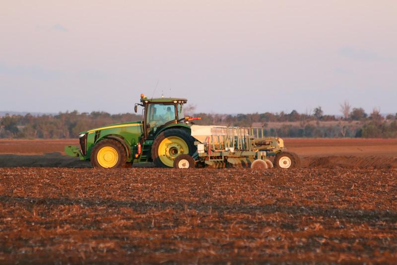 Cotton being fertilised
