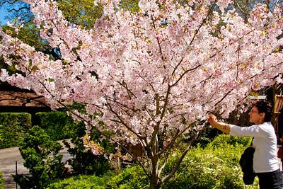 Hakone_Gardens-05.jpg