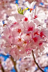 Hakone_Gardens-02.jpg