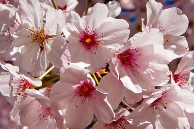 Hakone_Gardens-19.jpg
