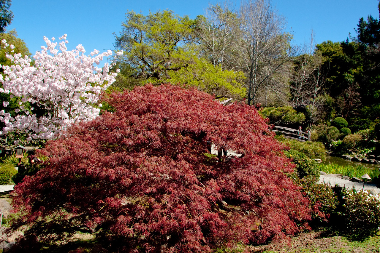 Hakone_Gardens-17.jpg