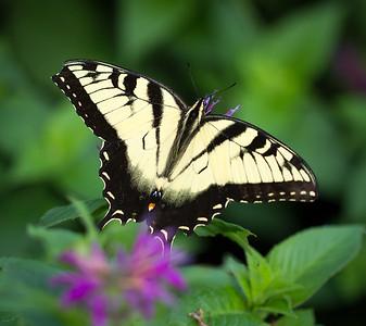 RME_Butterflies_003_20130721