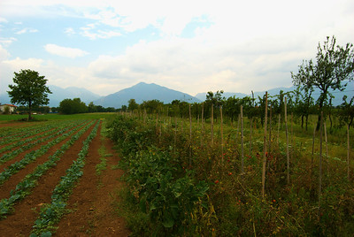 Late season vegetable crops at Agriturismo La Meridiana in Marano Vicentino near Thiene., Northern Italy.