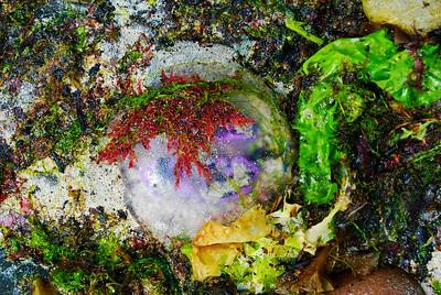 Jellyfish Mosaic in Elgol