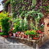 Tuscan Cottage House