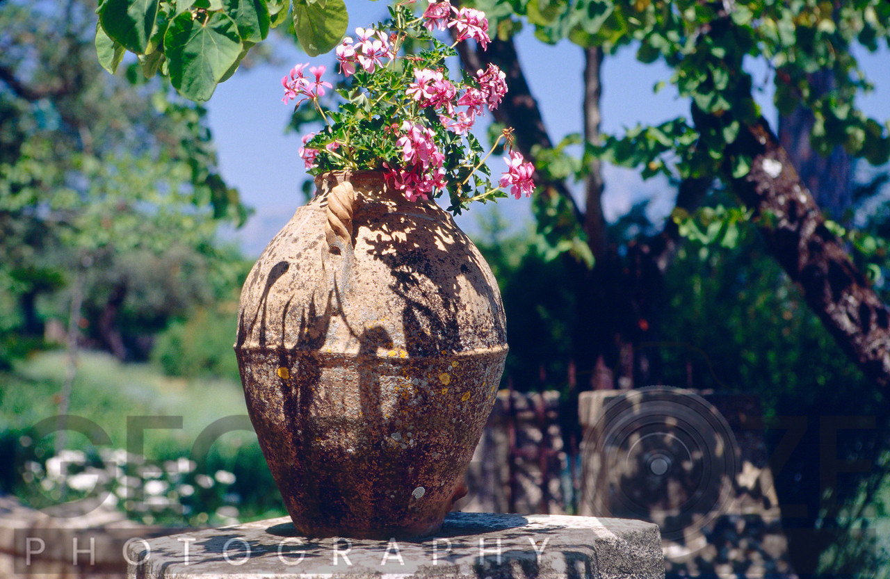 Close Up View of a Potted Flower in a Garden, Villa Cimbrone, Ravello, Campania, Italy
