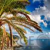 Palm Tree on the Coastal Hill, Vernazza, Cinque Terre, Liguria, Italy