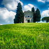 Small Chapel in a Tuscan Wheat Field Surronded by Cypress Trees