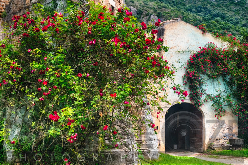 Rambling Red Roses covering a Medieval Building, Ninfa Garden, Italy