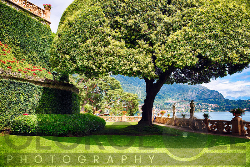 Villa Garden with a Nicely Trimmed Tree, Lake Como, Italy