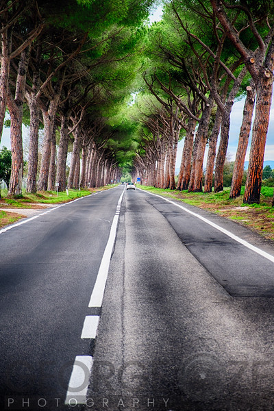 Italian Country Road with Stone Pine Tree Canopy