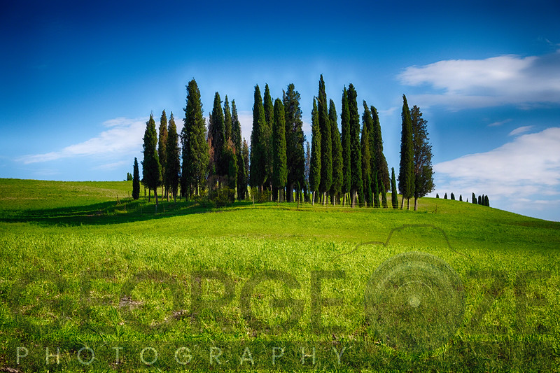 Group of Cypress Trees on a Knoll, San Quirico d'Orcia, Tuscany, Italy