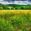 Spring Meadow, Pienza, Val d'Orcia, Tuscany, Italy
