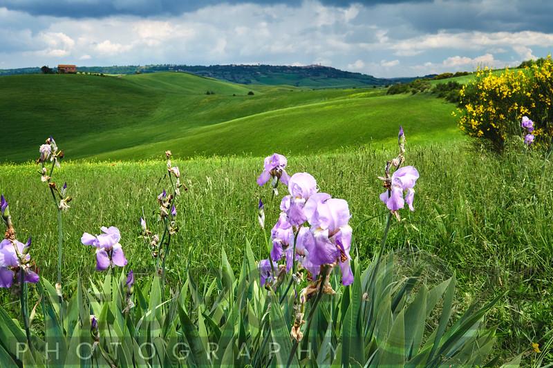 Rolling Tuscan Farmland, Pienaza, Val d'Orcia, Tuscany, Italy