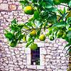 Citrus Fruit in an Old Italian Village