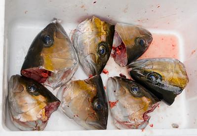 Fish Market, Shinjuku