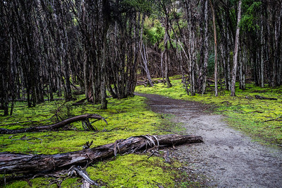 Mossy trail on Mount Iron