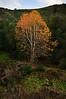 Fall, Azusa Canyon