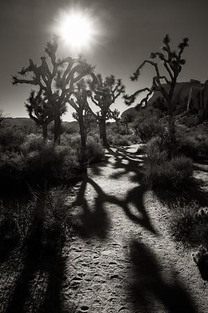 Joshua Tree Trail
